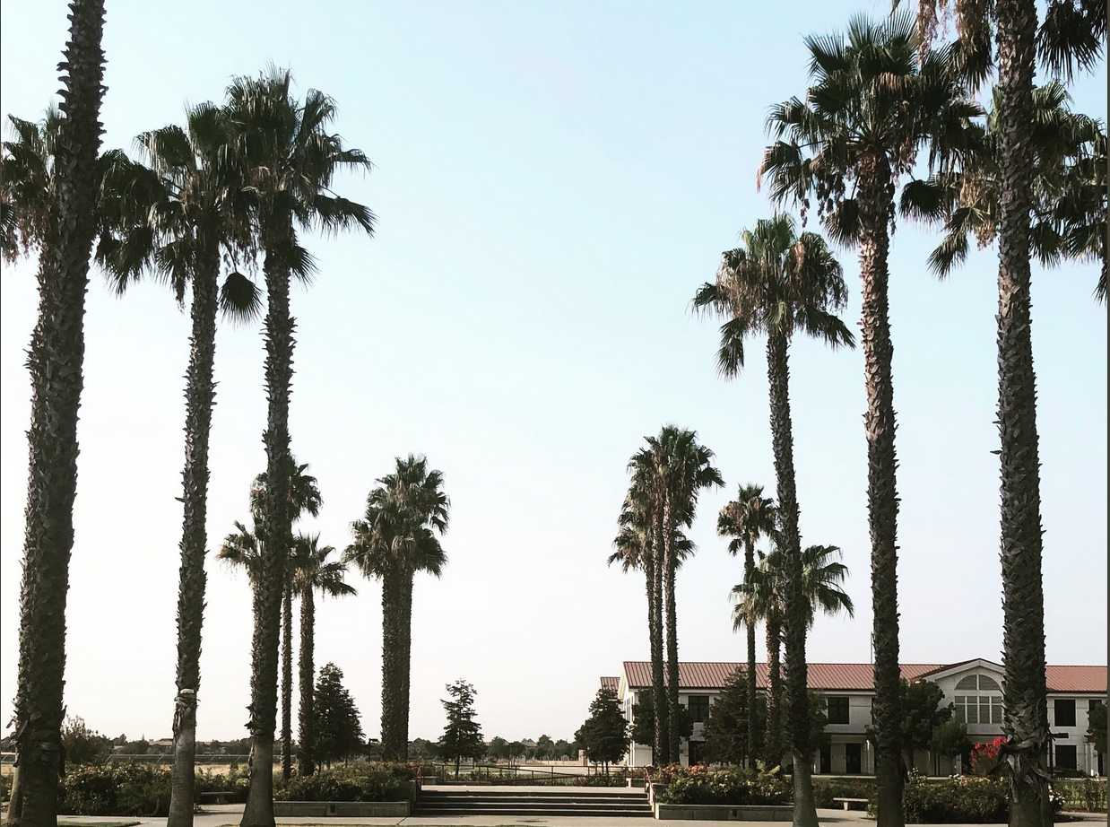 California Tribal College campus at the Woodland Community College in Woodland, California. The image shows a palm lined walkway to a building.